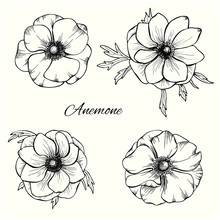 Anemone Vector Set In Hand Dra...