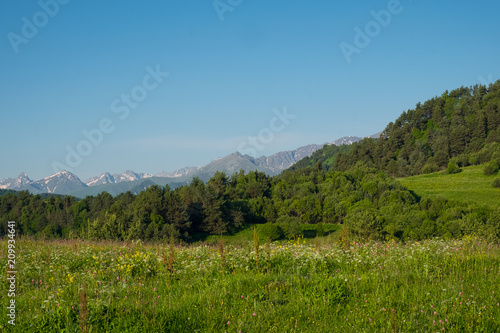 Foto op Plexiglas Blauw high mountain meadow with bright green grass and forest against the backdrop of mountain slopes and summits on a warm summer's day