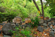Hives Placed In The Forest On The Trail Pico Turquino