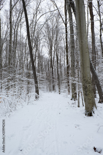 Fotografie, Obraz  Looking down a snowy path with footprints and sled tracks surrounded by trees covered in snow on snowy overcast day in the winter in upstate New York