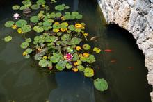 Pond With Koi Carps And Lily Pads, Lotus Flowers