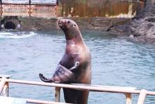 おたる水族館のトドシ...