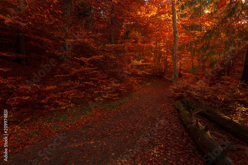 Photo sur Toile Rouge mauve Inside fairy tale romantic autumn forest