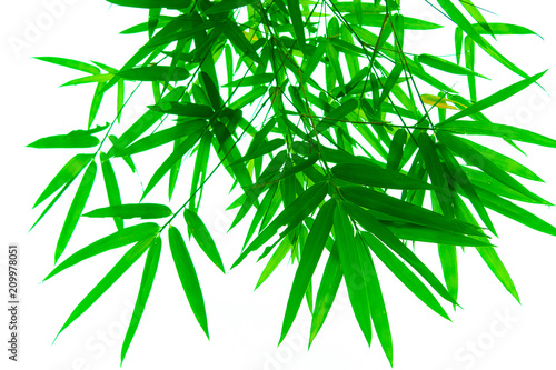 In de dag Bamboo Tree branches and leaves are green on a white background.