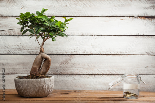 Bonsai tree and little money in glass jar