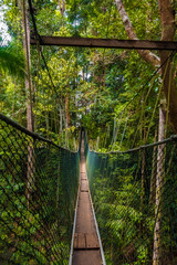 Fototapeta Mosty Taman Negara National Park's world's longest canopy walkway from a tourist's perspective, before making the first step on to the suspension bridge.