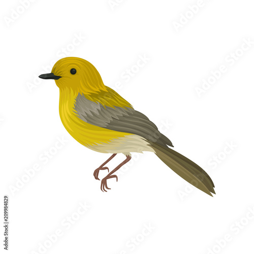 Obraz na plátně Detailed vector icon of yellow warbler