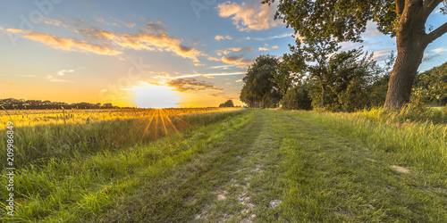 Foto auf Gartenposter Landschappen Wheat field along old oak track at sunset