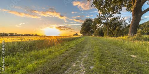 Foto op Plexiglas Platteland Wheat field along old oak track at sunset