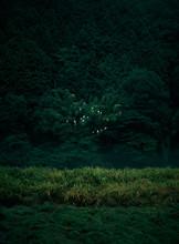 深い森に潜む白い鳥群