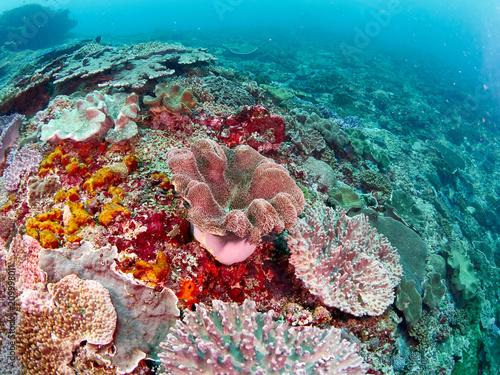 Staande foto Koraalriffen Soft coral reef