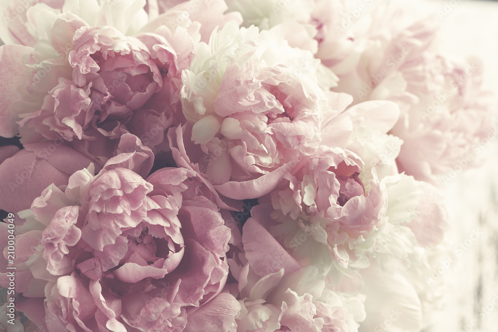 Fototapeta Fluffy pink peonies flowers background