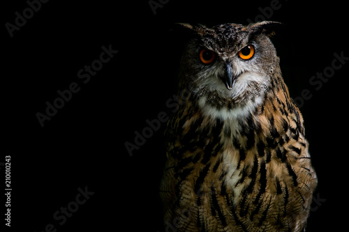 Spoed Fotobehang Uil Eagle Owl on black background