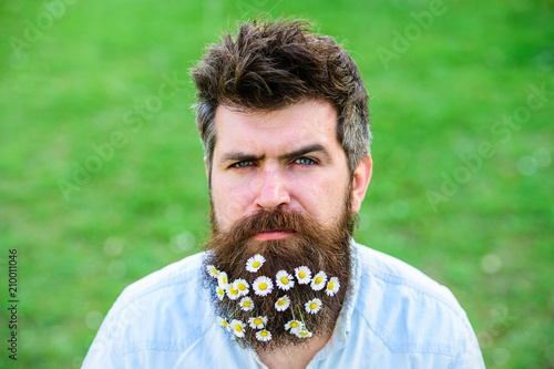 Masculinity concept. Hipster on strict face, green grass background, copy space. Man with beard and mustache enjoy spring, green meadow background. Guy with daisy or chamomile flowers in beard.