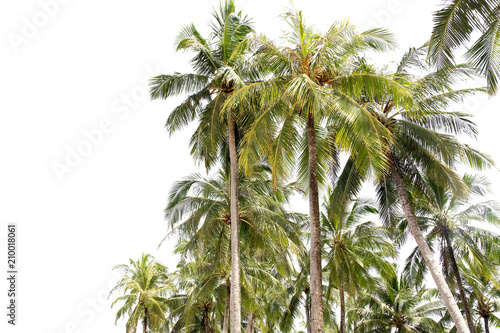 In de dag Palm boom Group of Coconut palm tree isolated