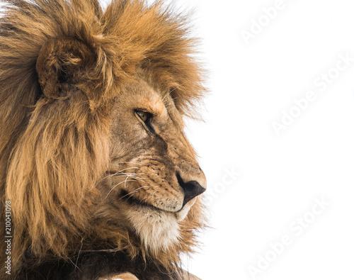 Foto op Plexiglas Leeuw Lion face close-up
