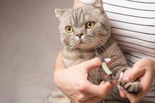 Hands Scissors Claws Cat, Doct...