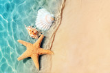 Fototapeta  - starfish and seashell on the summer beach in sea water.
