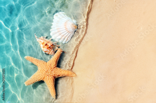 Tuinposter Strand starfish and seashell on the summer beach in sea water.