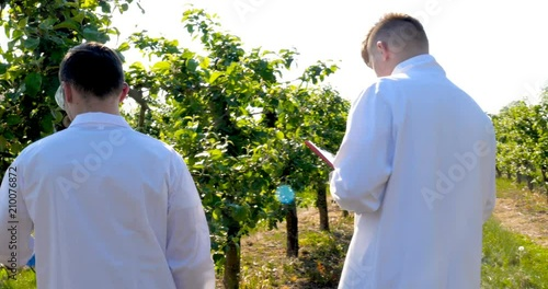 Two young agronomists or a biologist, working on the apple tree, write tests in a notebook, in white coats, rubber gloves, dna, goggles, leaf tests, a background of nature and greens Canvas-taulu