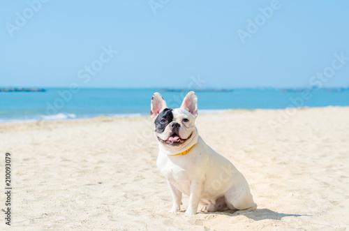 Stickers pour porte Bouledogue français french bulldog stand on the sand beach
