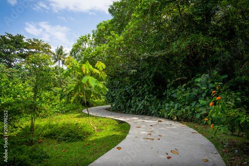Spoed Fotobehang Weg in bos Colorful, Sunny Walking Path in Forest - Sungei Buloh, Singapore