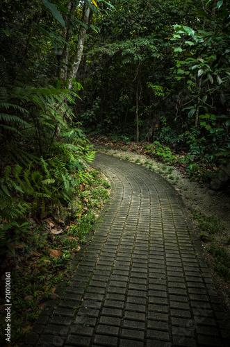 In de dag Weg in bos Cobblestone Walkway in a Lush Singapore Jungle