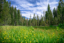 Green Forest Meadow With Yello...