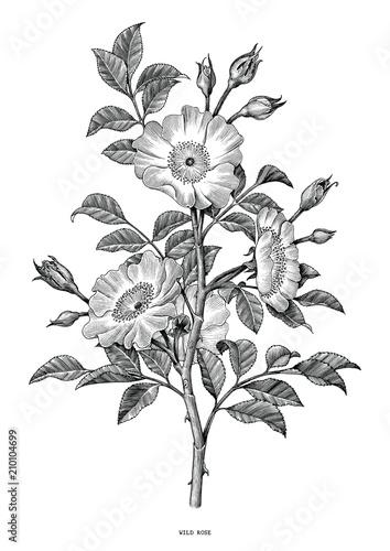 Dzika róża ręcznie rysunek czarno-biały vintage clipart na białym tle