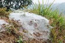 Spider Web On Ground.
