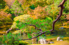 JAPANESE GARDEN. Beautiful Jap...
