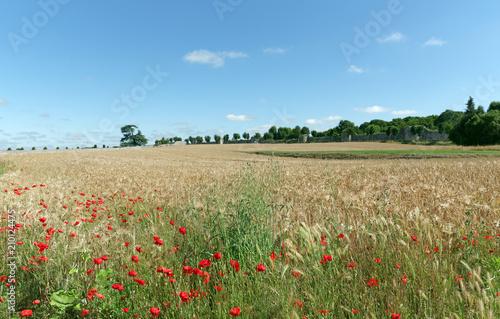 Obraz na płótnie Poppies field and ramparts of Provin medieval village