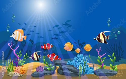 marine habitats and the bea...