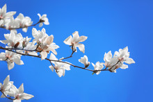 Beautiful Blossoming Tree On Sky Background