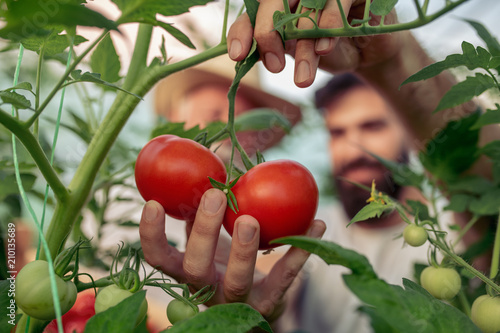 Foto Family in tomato plant at hothouse