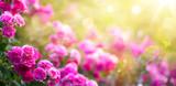 Fototapeta Kwiaty - Spring or summer floral background; pink rose flower against the sunset sky