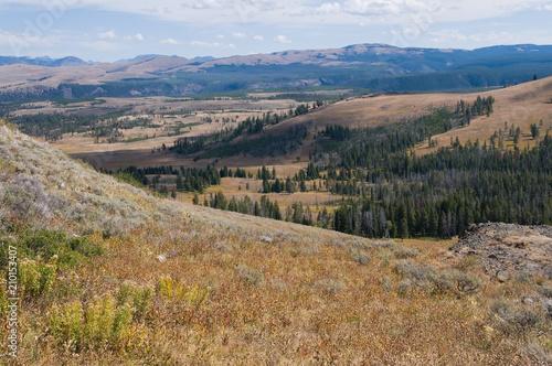 Fotografie, Obraz  Alpine meadow