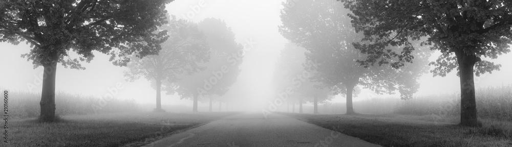 Fototapeta Avenue of Linden Trees shrouded in Fog, black and white