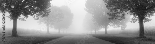 Cuadros en Lienzo Avenue of Linden Trees shrouded in Fog, black and white