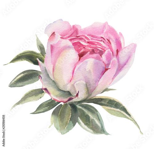 kwiaty-w-akwarela-peonie