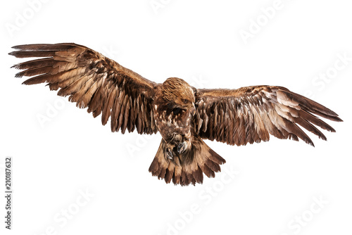 Garden Poster Eagle flying eagle isolated on white