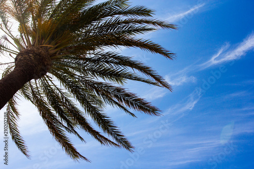 Tuinposter Palm boom summer and vacation - green palm tree over blue sky background