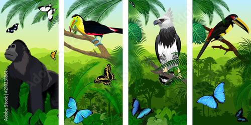 Fotografie, Obraz  Vector Jungle rainforest vertical baner with male gorilla, pale-mandibled aracar