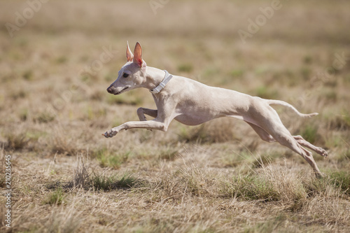 Fotomural Coursing training
