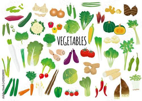 Fototapeta 野菜のイラストセット obraz