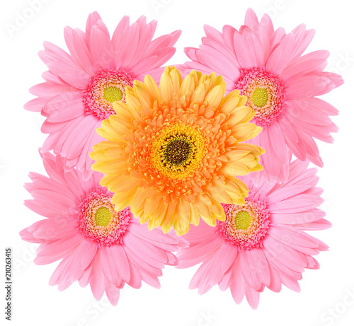 Foto op Aluminium Gerbera Pink and Orange gerbera daisy flower isolated on a white background