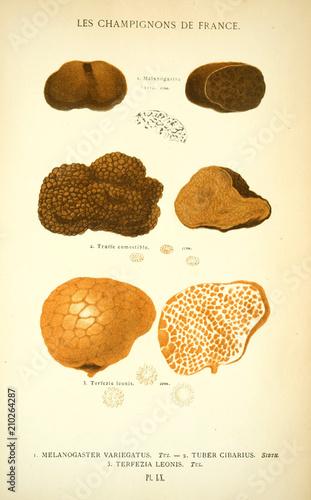 ilustracja-grzybow