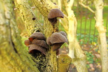 Photo Of A Group Of Auriculari...