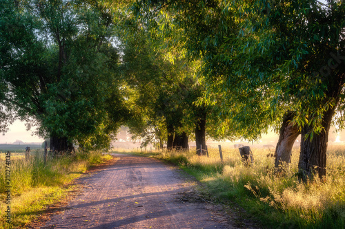 Obraz Mglisty poranek nad łąkami - fototapety do salonu