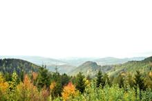 Autumn Aspen Trees With Foggy ...